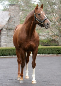 At Ashford Stud, 2014.