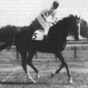 The handsome PENNANT may not have been PETER PAN'S best son but he was a solid campaigner and useful sire.