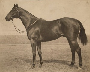 A conformation shot of EQUIPOISE reveals equine perfection, from the fine head through the deep chest and powerful hindquarters. One of his many famous descendants, BUCKPASSER, was blessed with the same almost perfect conformation.
