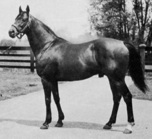 Joseph P. Widener's JAMESTOWN, shown here at stud