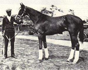 MATE (1928) was a son of PRINCE PAL.