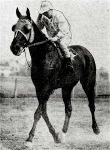 EQUIPOISE'S grandsire, PETER PAN, shown here as a colt racing in the colours of James R. Keene. Acquired by C.W. Whitney in 1915, PETER PAN proved himself to be a potent sire and BM sire. (Note: America's PETER PAN was a son of the great DOMINO and should not be confused with the Australian champion of the same name.)
