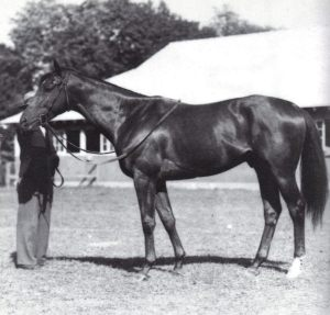 EQUIPOISE was the BM sire of Triple Crown winner, ASSAULT, pictured here with his handler.