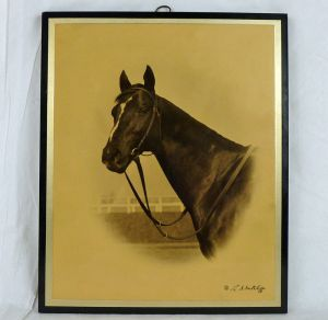 EQUIPOISE shown here in a stunning portrait by photographer Sutcliffe. Source: EBAY
