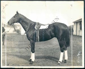 The Chocolate Soldier's performance in the Pimlico Futurity, together with his record at two, would see him share co-honours, with JAMESTOWN, as Champion Two Year-Old Colt of 1930. Photo and copyright, The Baltimore Sun.