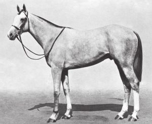 MAHMOUD pictured shortly after his Epsom Derby win.