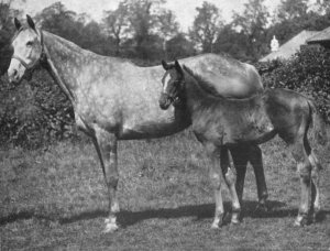 The gorgeous TAGALIE and her filly foal MABELLA pictured here in 1915. As a filly, TAGALIE had won both the Epsom Derby and