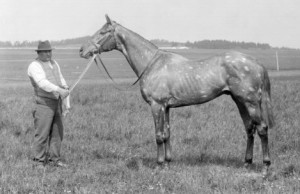 "THE TETRARCH was selected one of the best thoroughbreds of the last century, even though he only raced for a single season. Ridiculed for his markings (""chubari spots""), THE TETRARCH would have the last laugh by becoming a prepotent sire and BM sire."