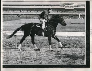 Another descendent of EQUIPOISE was the Kentucky Derby winner, TIM TAM, shown here at work. Photo and copyright, The Baltimore Sun.