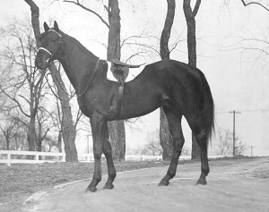 BLUE LARKSPUR was a really handsome horse and this photo shows him to advantage.