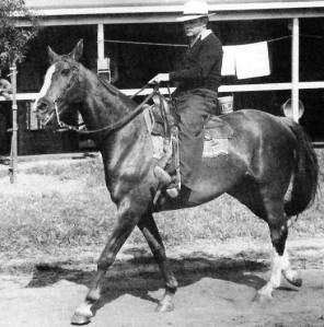Trainer CLYDE VAN DUSEN with his namesake after the gelding's retirement from racing. CLYDE the horse lived to be 22 years old and was, by all accounts, a favourite of his trainer.