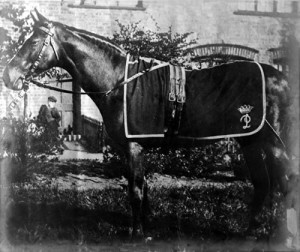 CARBINE at stud, probably in the UK, circa 1900.
