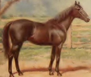 CARBINE'S son WALLACE was his best Australian-born son.