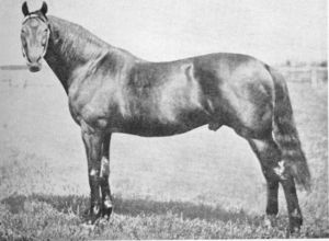 The amazing MUSKET, who had won at distances up to 3M, would give the NZ thoroughbred a world-class status.