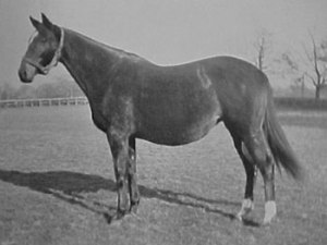 NOGARA, granddaughter of SPEARMINT and dam of NEARCO.