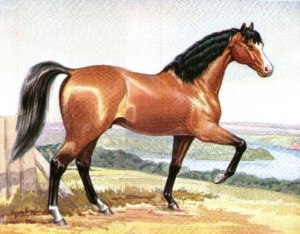 This painting of HECTOR is an indication of the accuracy of the record of his arrival to AUS in 1830. The travel companions were also known as OLD HECTOR and OLD NORTHUMBERLAND.