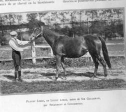 SPEARMINT'S daughter, PLUCKY LIEGE, exerted an enormous influence on the breed through her sons BULL DOG,