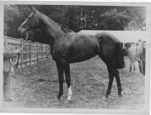 CARBINE'S best British son was SPEARMINT. Although a fragile runner with poor legs, SPEARMINT'S progeny were noted for their classic lines.