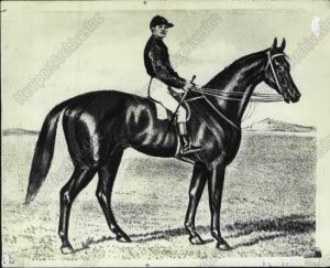 ARCHER (1856) was the first thoroughbred to win the Melbourne Cup.