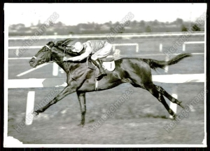 CHATHAM at work. Although he was beaten by PHAR LAP once, the handsome bay would defeat the champions PETER PAN and ROGILLA before his retirement.