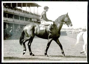 GLOAMING was destined to become one of the greatest AUS + NZ thoroughbreds of the twentieth century.
