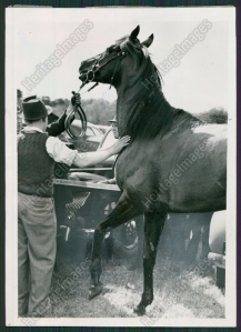 BERNBOROUGH being led into the van after his breakdown. In the photo, you can see the swelling in his foreleg.