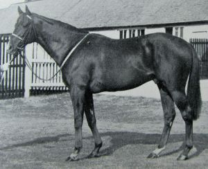 HOOK MONEY, champion son of BERNBOROUGH