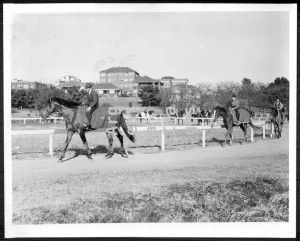 BERNBOROUGH (in the lead) takes a turn with other thoroughbreds on the track at Randwick.