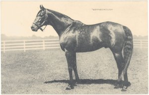 BERNBOROUGH at stud at Spendthrift in Lexington, Kentucky.