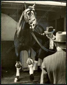 SHANNON arrives in Brisbane, where he won the 1946 Doomben Cup.