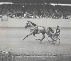 GREYHOUND and SEP PALIN on the track at Goshen, NY, where the Hambletonian is run.