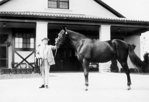 GREYHOUND'S sire, GUY ABBEY, pictured at Calumet Farm after the dispersal of Henry Knight's Almahurst bloodstock.