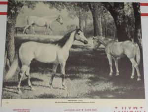 GREYHOUND stands in the foreground of George Ford Morris' print of his dam, ELIZABETH, and grandam,