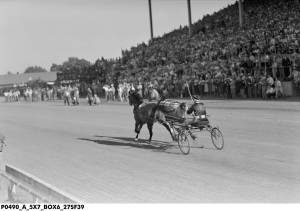 ROSALIND and GREYHOUND trot to a world record for a team at the Indiana State Fair. Photo and copyright, Indiana Library.