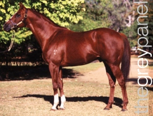 KINGSTON RULE was a stunning colt who reminded many of his sire, SECRETARIAT.