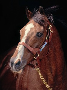 NORTHERN DANCER'S blaze -- and temperament -- are very close to that of TIGGY WIGGY, a direct descendant of Canada's King of the Turf.