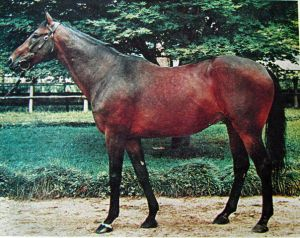 CLAUDE, the sire of ROSE OF KINGSTON, was a homebred of Frederico Tesio who won the Italian Derby. He began his stud career at Dormello in Italy, before moving to Kingston Park farm in Australia.