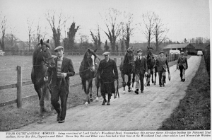Lord Derby's stud, showing four outstanding stallions out for their daily walk with their lads: ALCYDION,