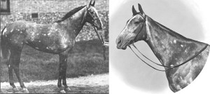 MUMTAZ MAHAL, his daughter, is one of the most important of all thoroughbred broodmares.