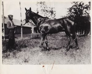 SYSONBY at Saratoga in 1904 takes a time-out to graze and watch the action on the backstretch.