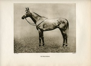 TETRATEMA, pictured here by W.A. Roach, a champion son of THE TETRARCH