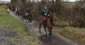 HURRICANE FLY leads out the Mullins' horses on a morning work.
