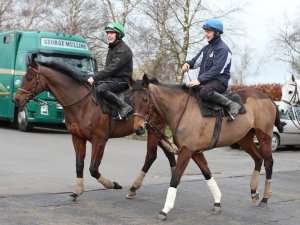 HURRICANE FLY (outside) and stablemate, the brilliant mare, QUEVEGA, at Cheltenham.