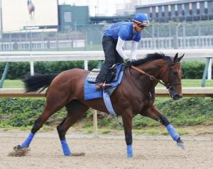 American Pharoah shown working at Churchill Downs pre-Belmont Stakes.