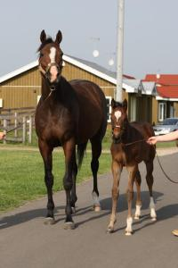 IN LINGERIE with her 2014 FRANKEL filly. The mare's BM sire is STORM CAT.