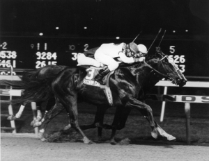 Storm Cat and jockey Chris McCarron win the 1985 Young America Stakes (Grade I) at Meadowlands on October 10, 1985. Photo by: Jim Raftery / Turfoto (Track Photographer)
