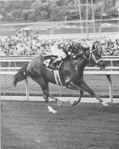 TERLINGUA (SECRETARIAT ex CRIMSON SAINT) during her racing career.