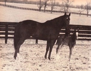 TERLINGUA at Ashford in the Lockridge-      years with her very first foal, a filly by LYPHARD, who