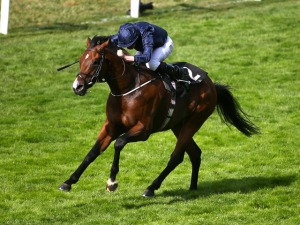 The 3 year-old WAR ENVOY scoots home for Coolmore under Ryan Moore to win the Britannia Stakes on Thursday, June 18 at Royal Ascot.