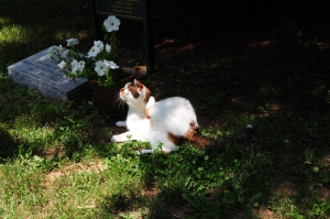 One of OLD FRIENDS' kitties hanging out in the shade of the cemetery. Photo and copyright, Liz Read.